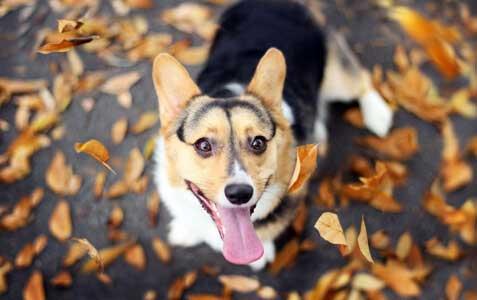 Pet Behavior Management